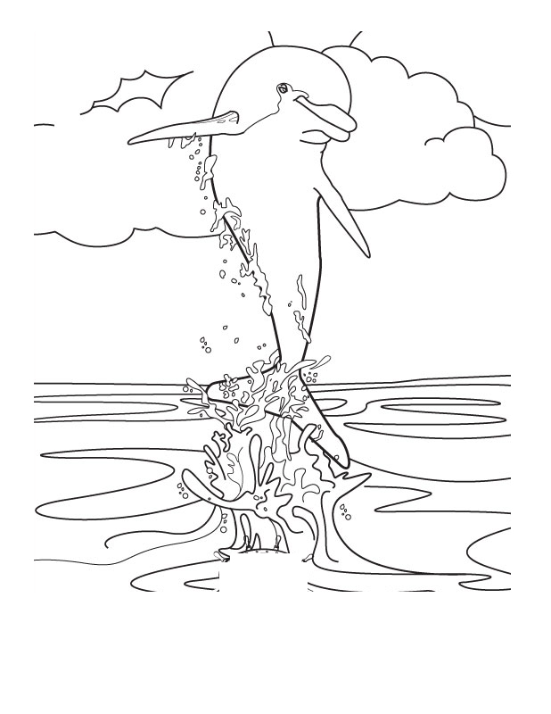 Dolphin Coloring Pages 10